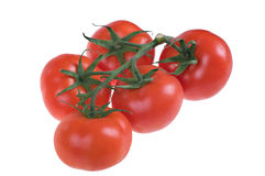Fresh juicy tomatoes Royalty Free Stock Photo