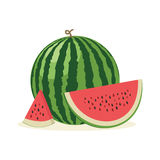 Fresh and juicy whole watermelons and slices. Vector illustratio Royalty Free Stock Image