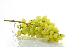 Fresh juisy grape isolated on white Stock Photography
