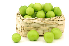 Fresh jujube fruit  (Ziziphus jujuba) Stock Photos