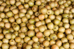 Fresh jujube (Ziziphus jujuba) background. Thai fruit in Thailand Royalty Free Stock Image