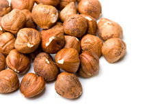 Fresh jumbo filberts hazelnut isolated close up Royalty Free Stock Photos
