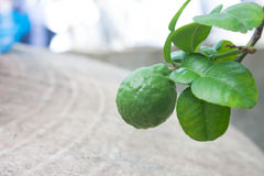 Fresh Kaffir Lime Stock Photos