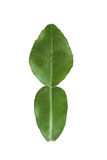 Fresh kaffir lime leaf Stock Photo