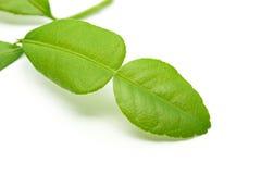 Fresh kaffir lime leaf on white Royalty Free Stock Photos