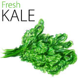 Fresh Kale royalty free illustration