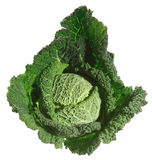 Fresh kale Stock Image