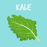 Fresh kale on blue  Royalty Free Stock Photo