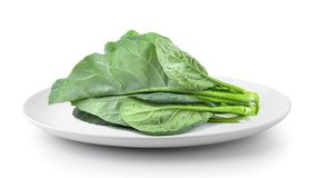 Fresh kale in a plate isolated on a white background. Kale in a plate isolated on a white background Royalty Free Stock Photos