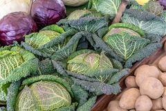 Various types of fresh cabbage. Fresh kale, red cabbage, cabbage and potatoes Stock Images
