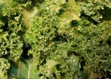 Fresh kale Stock Images