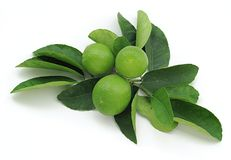 Fresh Key Limes Stock Photo