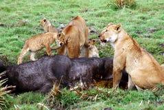 Fresh Kill in the Serengeti Stock Photo