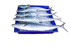 Fresh king mackerel fish isolated. Fresh king mackerel fish on ice backet isolated on white background Stock Photo