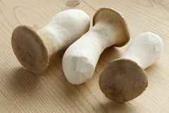 Fresh king oyster mushrooms. Fresh raw king oyster mushrooms Royalty Free Stock Image
