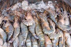 Fresh king praw. Close up king prawn in the market Royalty Free Stock Photography