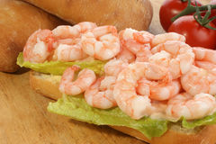 Fresh king prawns on organic salad Royalty Free Stock Photos