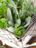 Fresh kitchen herbs Stock Photos
