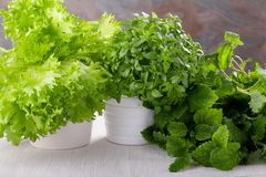 Fresh kitchen herbs. Basil, salad and lemon balm stock photos
