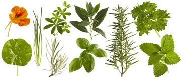 Fresh kitchen herbs collection isolated. On white background royalty free stock images