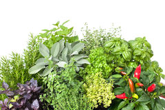 Fresh kitchen herbs stock images