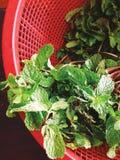 Fresh Kitchen Mint on street market Stock Images