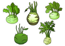 Fresh  kohlrabi cabbage vegetables Royalty Free Stock Photos