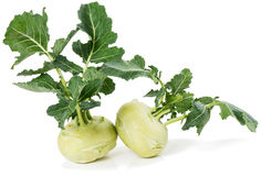 Fresh kohlrabi vegetable Royalty Free Stock Photos