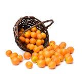 fresh kumquat Stock Image