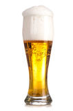 Fresh lager beer Royalty Free Stock Photo
