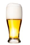 Fresh lager beer Royalty Free Stock Image