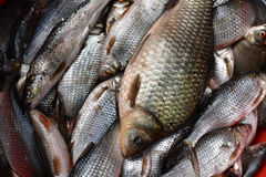 Fresh lake fishes in the fish market. Fresh fishes background in the fish market Stock Photography