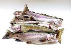 Fresh Rainbow Trout. Fresh water rainbow trout on a white isolated background Royalty Free Stock Image