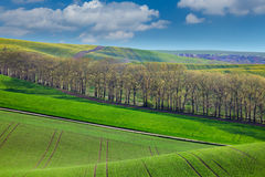 Fresh Landscape of fields in countryside Stock Photography