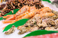 Fresh langoustines, razor clams and oysters Royalty Free Stock Photography