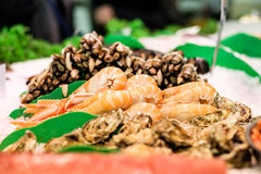 Fresh langoustines, razor clams and oysters Royalty Free Stock Photos