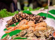 Fresh langoustines, razor clams and oysters Stock Photography