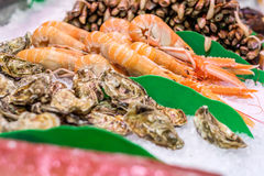 Fresh langoustines, razor clams and oysters Stock Image