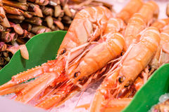 Fresh langoustines and razor clams. At seafood market Royalty Free Stock Photos