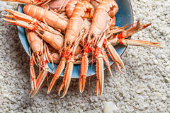 Fresh langoustines served Stock Images