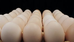 Fresh large chicken eggs rotate on a stand. stock video footage