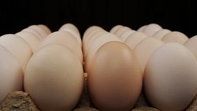 Fresh large chicken eggs rotate on a stand. stock footage