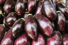 Fresh and large eggplants in one of the markets of Amman, Jordan.  Stock Photos