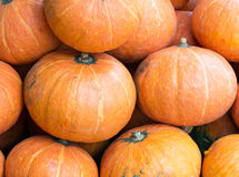 Fresh large pumpkin Royalty Free Stock Images