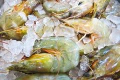 Fresh large shrimp in the ice. Fresh large shrimp on ice in the market Royalty Free Stock Photo