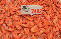 Fresh large tiger prawn cooked on crushed ice on display for sale with price tag at fish market Royalty Free Stock Photos