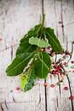 Fresh laurel and peppercorns Stock Photo