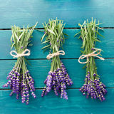 Fresh Lavender Royalty Free Stock Images
