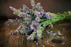 Fresh lavender Stock Photos