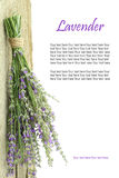 Fresh lavender Royalty Free Stock Photo